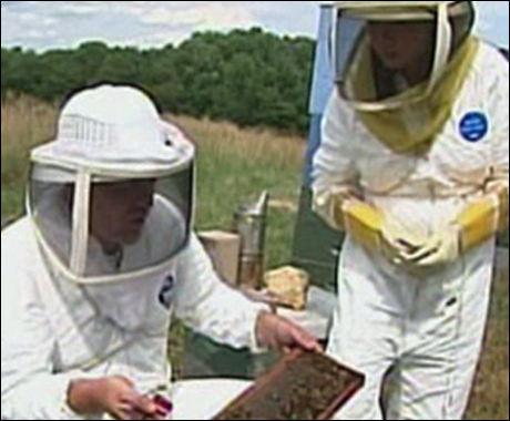 FORSVINNER: Biene forsvinner og birøktere fortviler. Foto: KameraOne Foto: