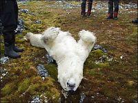 Polsk forsker skjøt isbjørnen på Svalbard