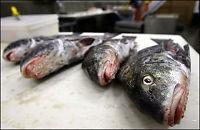 Tusener av døde fisk oppdaget i Louisiana