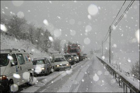 KØER: Fullt snøkaos på veiene i Sør-Vestlandet. Bildet er tatt på E-39 ved Bue i går ettermiddag. Foto: Scanpix