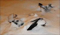 «Fugleregnet» i Sverige: - Vi er i villrede