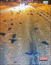 Døde fugler falt ned fra himmelen i Sverige
