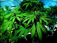 To tatt for cannabisdyrking i Lyngdal
