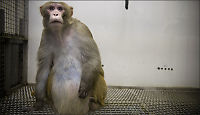 Gjør aper til sofagriser