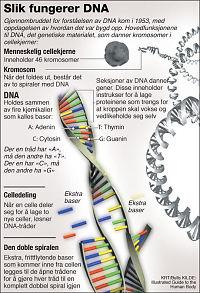 Dette er DNA