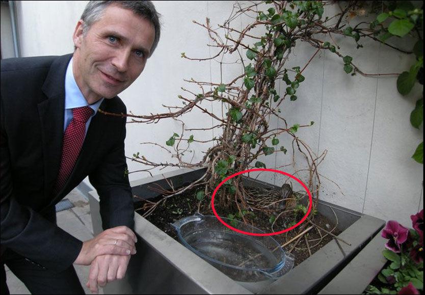 AT DET GÅR AND: Stokkanden (til høyre) har lagt ni egg på terrassen i statsministerboligen til Jens Stoltenberg. Foto: Statsministerens kontor