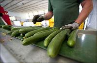 Spania truer med agurksøksmål