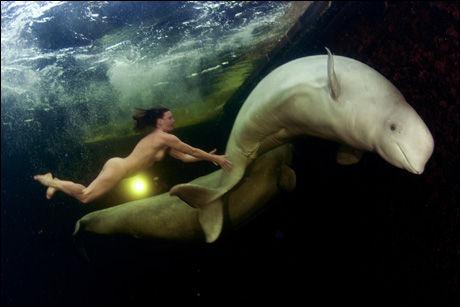 KOS: Både hvaler og menneske ser ut til å hygge seg i hverandres selskap. Tamme hvaler synes det er fint med besøk, tror forsker Christian Lydersen. Foto: KNS News