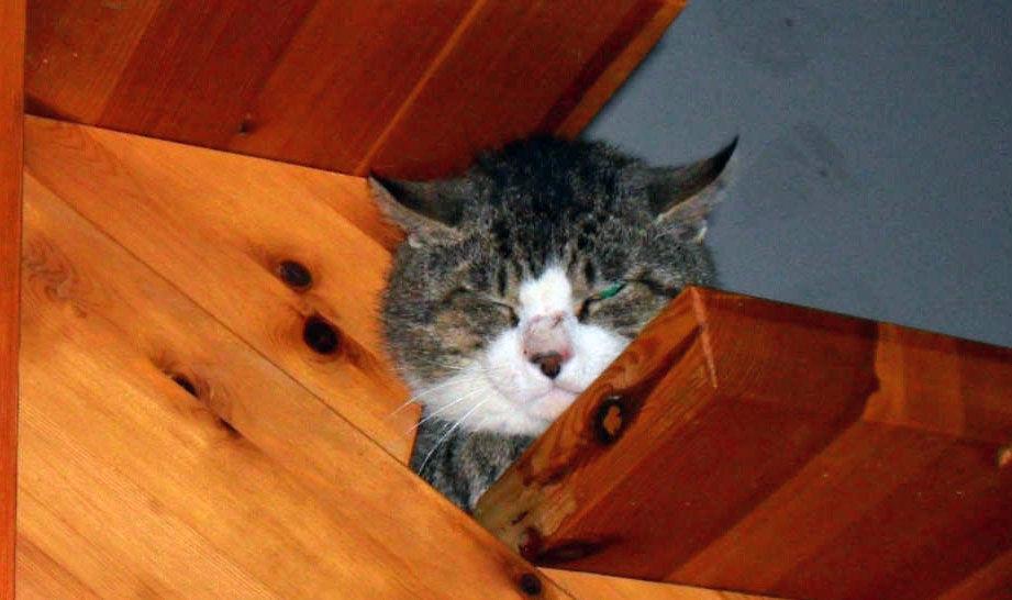 IKKE KASTRERT: Her er kattepusen i trappen, like før han blir fanget. Foto: Kenneth Olsen