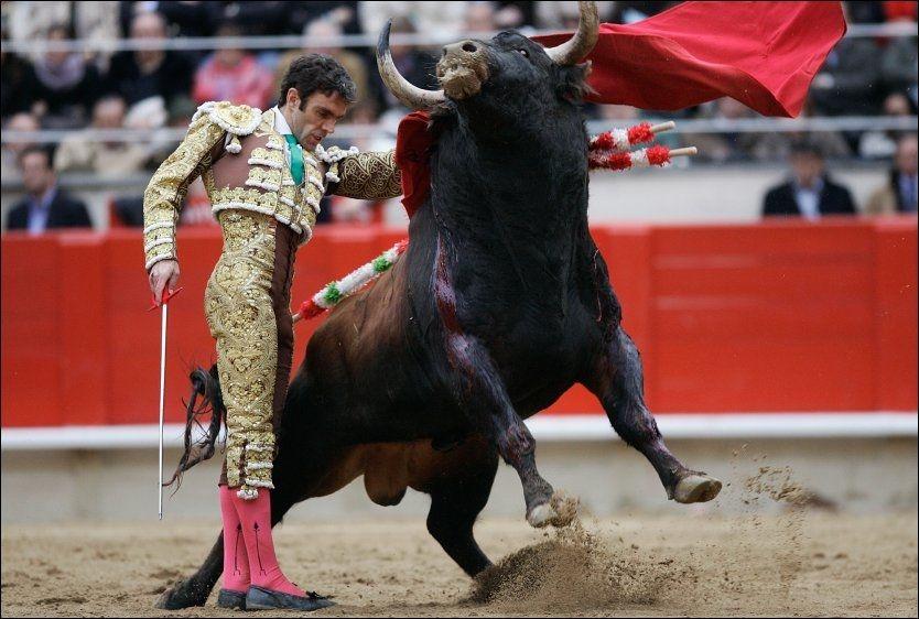 SISTE CORRIANDEN: Matador Jose Thomas skal opptre under det som kan bli den siste corrianden på La Monumental i Barcelona. Her er han i full sving på samme stadion i 2008. Foto: AP