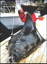 Reinhard (62) fanget gigantkveite (245 kg)
