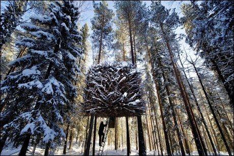 Hytte i trærne sverige