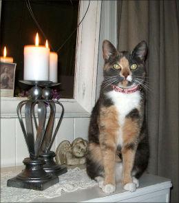 DREPT: Thelma (2) ble funnet drept og stygt mishandlet på Raufoss. I samme nabolag er seks andre katter savnet. Foto: Privat