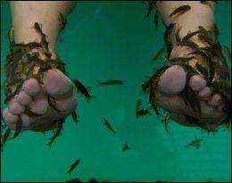 FISKESPA: En av få grunner til å stoppe en dag eller to i Los Americas er tilbudet om kilende pleie av slitne bein. Livretten til den tyrkisk fisken Garra Rufa er døde hudceller. Foto: JAN LUDVIG HUNDVEBAKKE Foto: