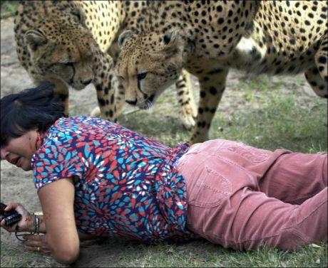 BLODIG: Violeta ble både bitt og slått av gepardene i dyreparken Kragga Kamma Game Park. Foto: Archibald D'Mello/AP
