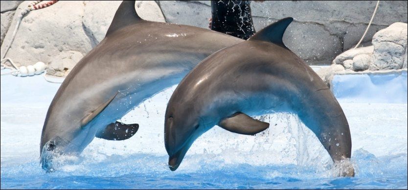 GRUSOM DØD: Delfinene må ha lidd en pinefull død, mener marinbiologer og dyrepassere etter at to publikumsyndlinger i den sveitsiske marinparken Connyland skal ha blitt forgiftet av et heroinlignende partydop under et raveparty. Først trodde man det var lyden av teknomusikk som drepte delfinene. Foto: Geir Olsen