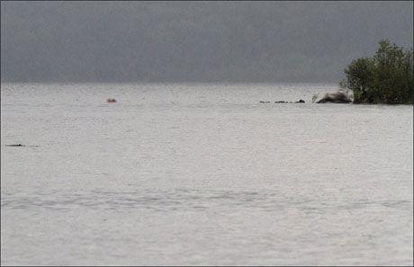 GJEMTE SEG: Her på sydspissen av Utøya gjemte mange ungdommer seg for Breivik. Fem ble drept og flere ble hardt skadet. Foto: Jan Bjerkeli
