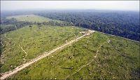 Solhjell: - Stort press på regnskogen i Brasil