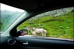 PÅ NORSKE VEIER: Også i Norge er det viktig å sjekke avtalen før du leier bil og legger ut på tur. Bildet er tatt mellom Hardangervidda og Aurlandsdalen Foto: KRISTER SØRBØ / VG