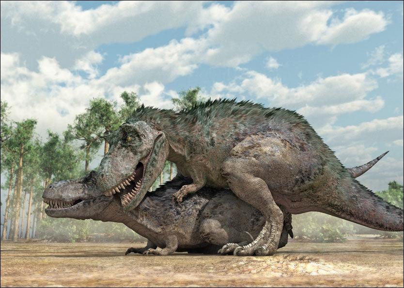 KJEMPEGØY: Slik tror forskere at Tyrannosaurus Rex paret seg. Hannen klatret opp på hunnen bakfra. Foto: Illustrasjon: Gcsociety.org