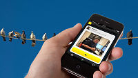 Ny app kommuniserer med fuglekvitter