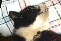 Katt skadet av halsbånd - måtte avlives