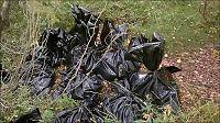 Fant over 25 poser med menneskebæsj i skogen