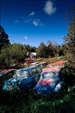STADIG SALG: Fortsatt kan bilentusiaster finne nyttige deler blant Rune Ivanssons biler inne i skogen. Foto: Line Møller