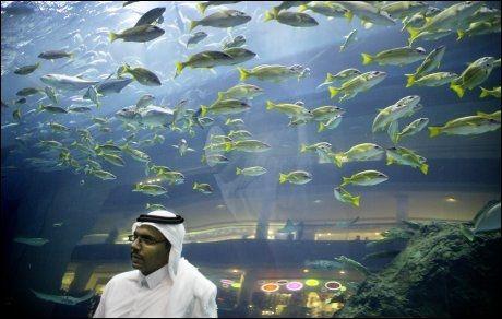 SOM FISKEN I VANNET: Omgitt av 1200 forretninger og 160 restauranter i Dubai Mall, kan besøkende betrakte 33.000 fisk og sjødyr gjennom svære glassvinduer i Midt-Østens største akvarium! I Dubai skal alt være størst, flottest og best. Foto: Gøran Bohlin