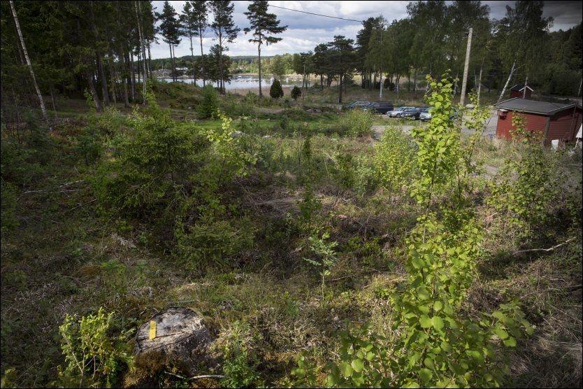 MOTORSAGMASSAKRE: 78 trær ble hogd ulovlig ved parkeringsplassen ved friområdet Dusa i Skjeberg i Sarpsborg kommune, konkluderer tingretten. Foto: TOM-EGIL JENSEN