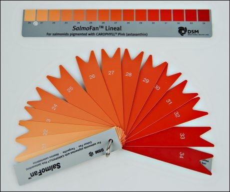 FARGEGLAD LAKS: Oppdrettslaksens farge måles blant annet med slike fargevifter. Desto mer astaxanthin oppdretterne tilsetter fôret, desto rødere blir laksen for deg som kunde.