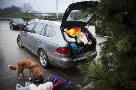 RAST: Det er viktig å stoppe ofte slik at hunden får nok mat og drikke underveis. Luna på bilferie fra Oslo til England og Skottland. Foto: KARIN BEATE NØSTERUD.
