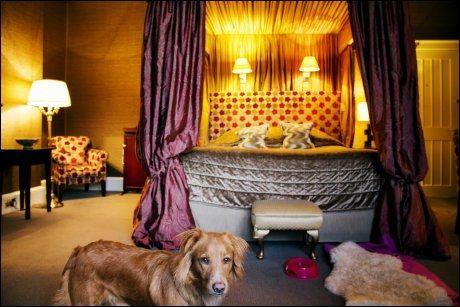 NYE REGLER NESTE ÅR: Luna koste seg på Mar Hall i Skottland. Og fra neste år skal det ifølge EU bli enklere å reise med kjæledyr. Foto: KARIN BEATE NØSTERUD.