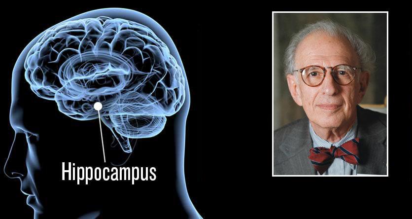 NYE BEHANDLINGSMULIGHETER: Amerikanere, med nevroforskeren Eric Kandel i spissen, har klart å reversere aldersrelatert hukommelsestap hos rotter og mus. Hippocampus er hukommelsessenteret i hjernen. Foto: MICROSTOCK