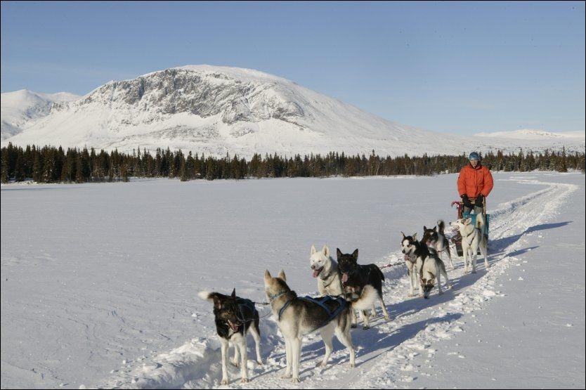 HUNDEKJØRING: Len deg tilbake i sleden eller kjør ditt eget hundespann. Dette er i Hemsedal. Foto: NILS-ERIK BJØRHOLT
