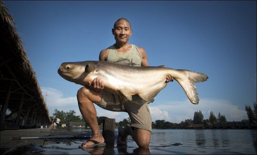 FORNØYD!: Oslo-mannen Tay-Young Pak poserer med en 40-kilos Mekong Giant Catfish, tatt på stang i Bungsamran Lake rett utenfor Bangkok. Kjempefisken kan bli 300 kilo tung. Straks skrytebildet var tatt, ble kjempefisken pent satt ut igjen - til glede for neste fisker. Foto: Robert S. Eik