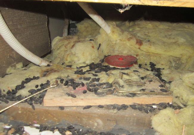 <p>ROTTEREIR: Selger skrev han ikke kjente til rotteplager. Skjult i gulvet fant huskjøpene denne fellen dekket av avføring fra rotter.</p>