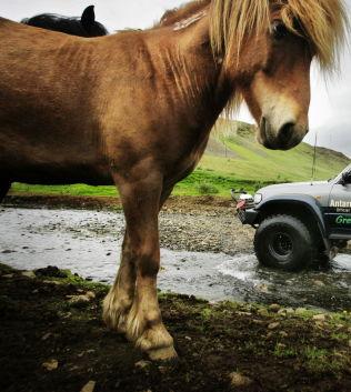 <p>ISLAND: Landet kan oppleves med hestekrefter.</p><p><br/></p>