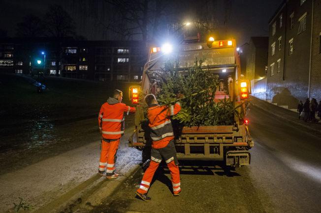 <p>JULETREINNSAMLING: Renovasjonsetaten i Oslo kommune plukker opp gamle juletrær ved Grünerhagen mandag kveld.<br/></p>