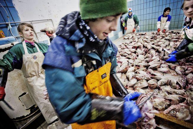 <p><b>KAN FÅ PROBLEMER:</b> Norsk fiskeeksport har ikke tollfrihet til EU eller USA, og vil bli skadelidende, dersom partene kommer til enighet om frihandel, skriver kronikkforfatteren.</p>