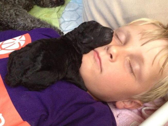 <p>VALPEKOS: Dette bildet med prins Sverre Magnus la Mette-Marit ut på sin Twitter-konto etter valpefødselen.<br/></p>