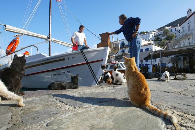 <p>GRESK STEMNING: Rolig og avslappet, slik vi forbinder med Hellas. Her fra øya og byen Hydra.<br/></p>