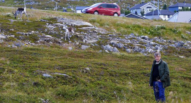 <p>UØNSKET BESØK: En simle og en reinkalv trasker rolig bort, da ordfører Alf E. Jakobsen nærmer seg, i et boligområde som kalles «prærien» i Hammerfest.</p>