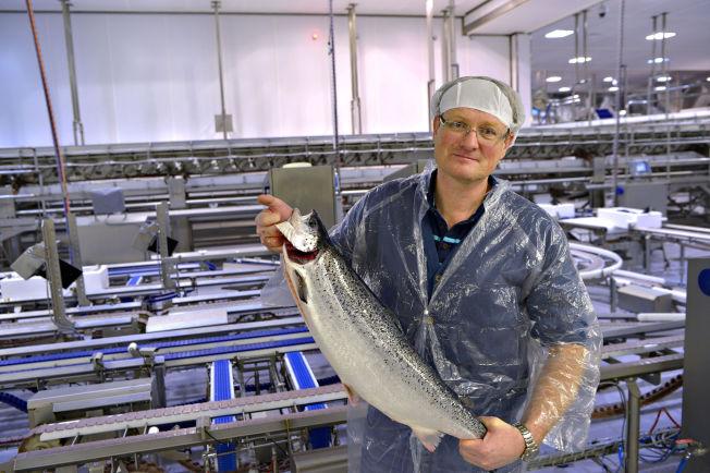 <p>LAKSEMANN: Nordlaks-sjef Inge Berg er god for over tre milliarder kroner, men er fortsatt aktiv i fabrikken hvor den ene laksen etter den andre er på vei mot pakking.</p>