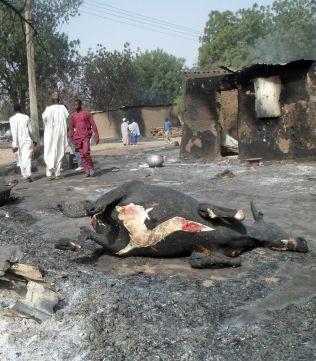 <p>KADAVER: En forkullet ku ligger i gaten i Dalori dagen etter Boko Haram-angrepet.</p>