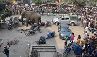Elefant gikk amok i India
