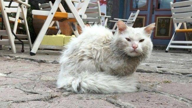 <p>ALENE PÅ LESVOS: Slik så katten Kankush ut da han ble funnet av hjelpearbeidere på gata på Lesvos.</p>