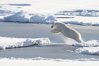 Forsker: – Absurd varme i Arktis