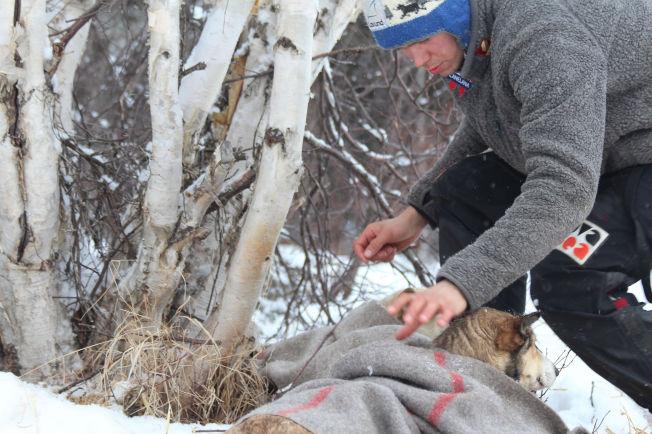 <p>Joar Leifseth Ulsom fra Rana har latt hundene sin få mer hvile før han kjørte mot Nulato.Her er han i Ophir.<br/></p>